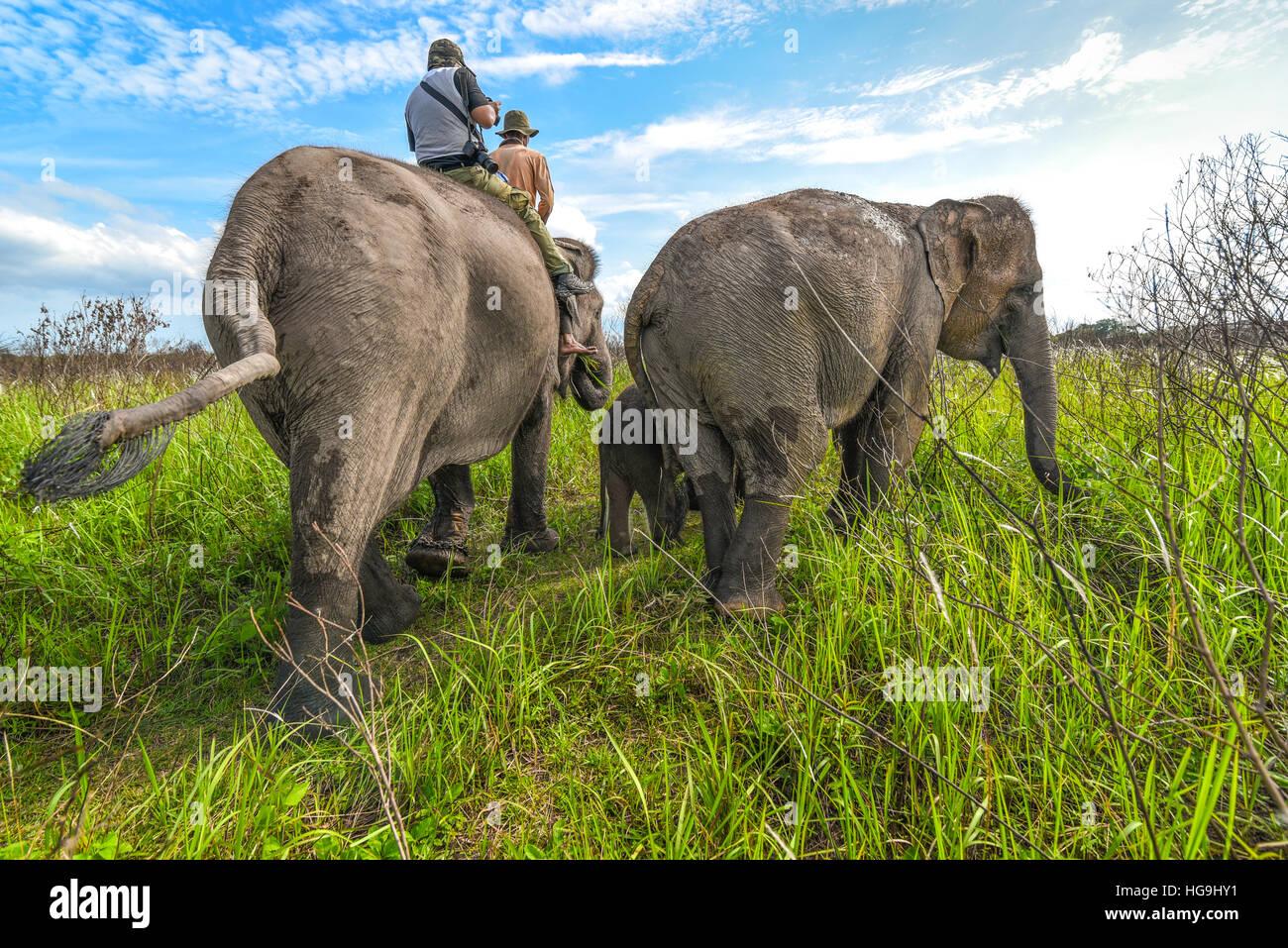 Paseos en elefante en el Parque Nacional Way Kambas, Lampung, Sumatra, Indonesia. © Reynold Sumayku Imagen De Stock
