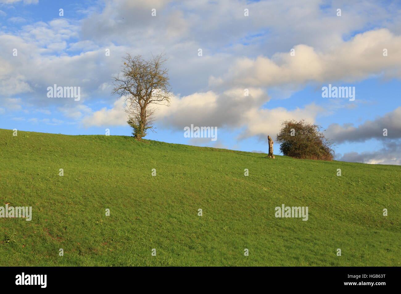 Árbol de pradera verde con el cielo azul y las nubes Imagen De Stock