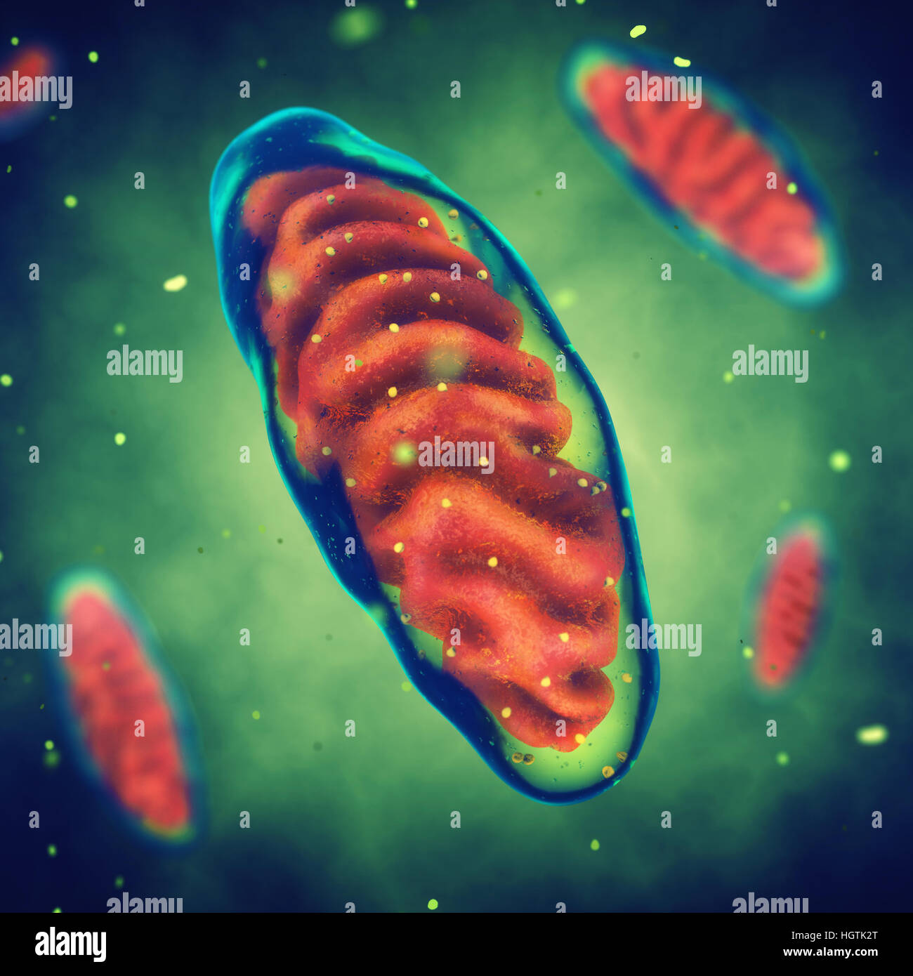 Las mitocondrias , energía , enfermedad mitocondrial celular Foto de stock