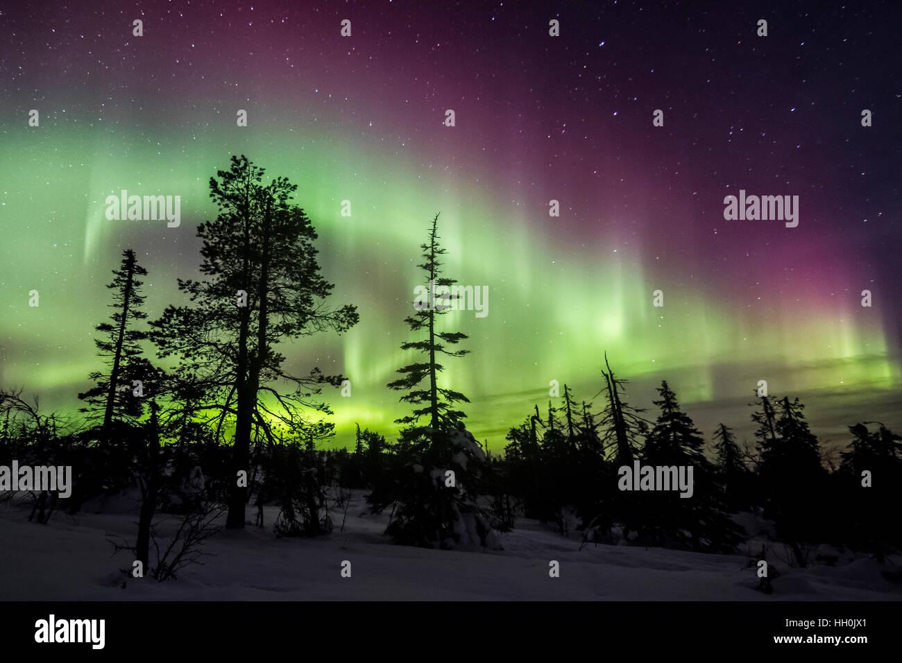 Las luces del norte en el Parque Nacional de Riisitunturi, Finlandia Imagen De Stock