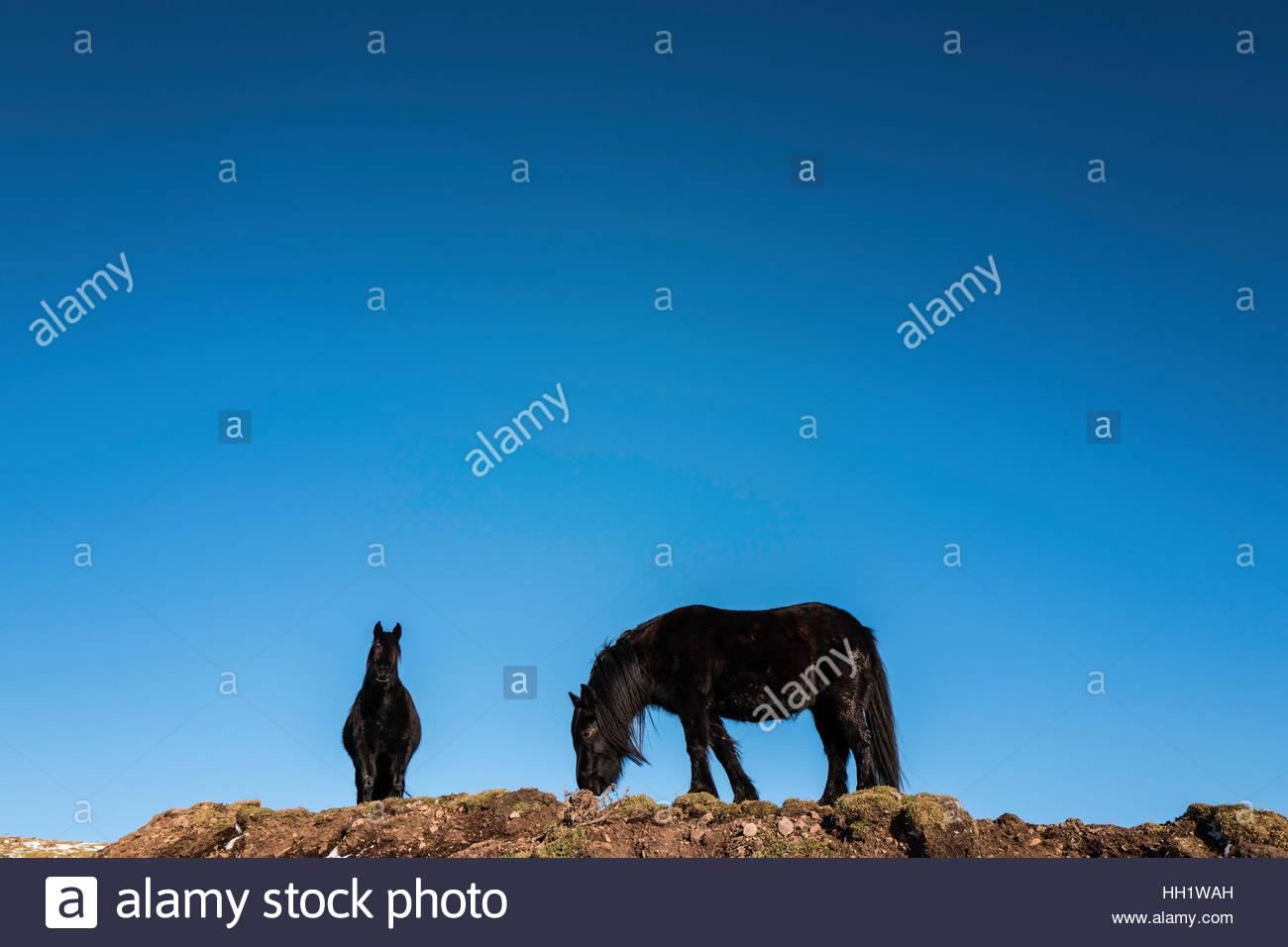 Cayeron ponis aginast negro un cielo azul. Imagen De Stock