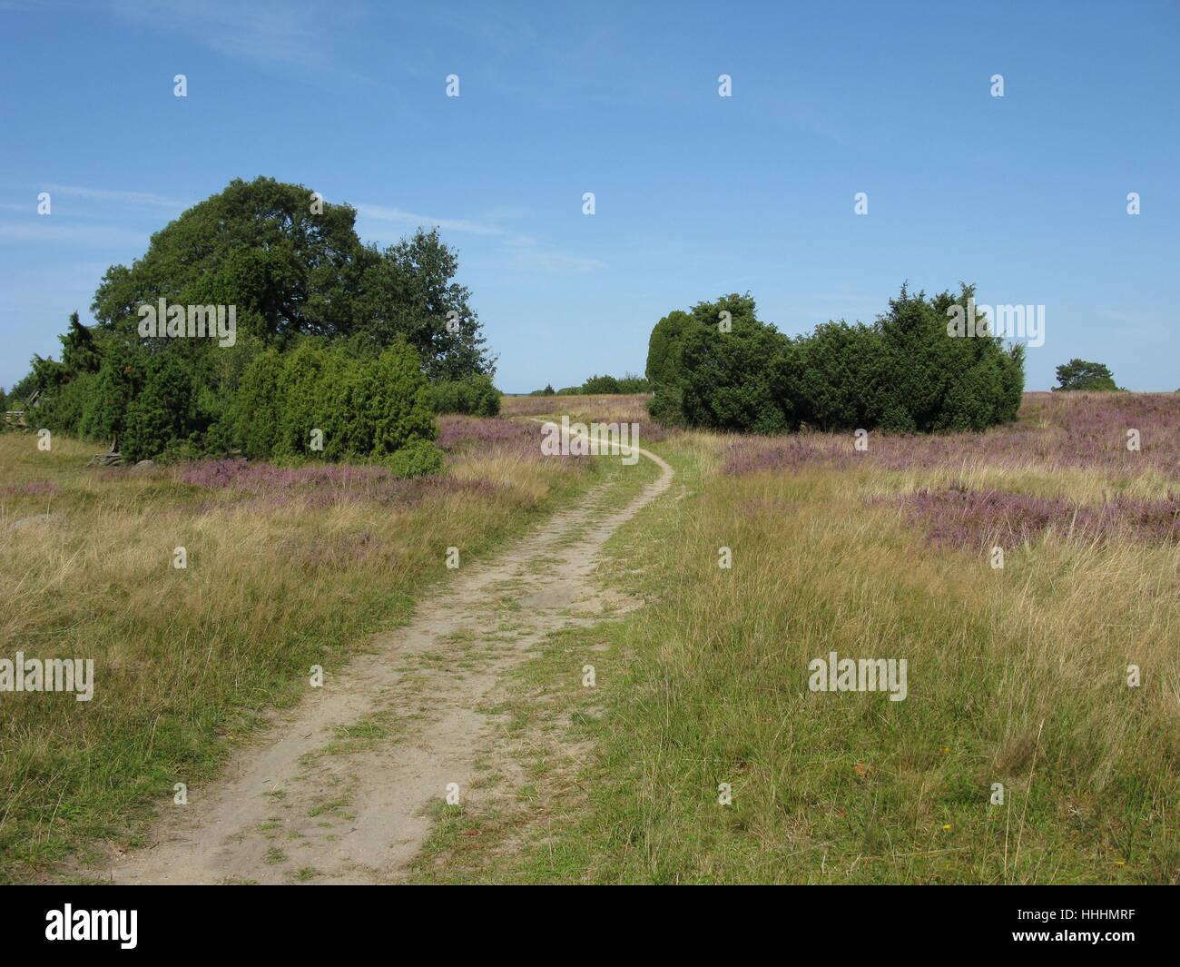 Senderismo en el lneburg heath Foto de stock