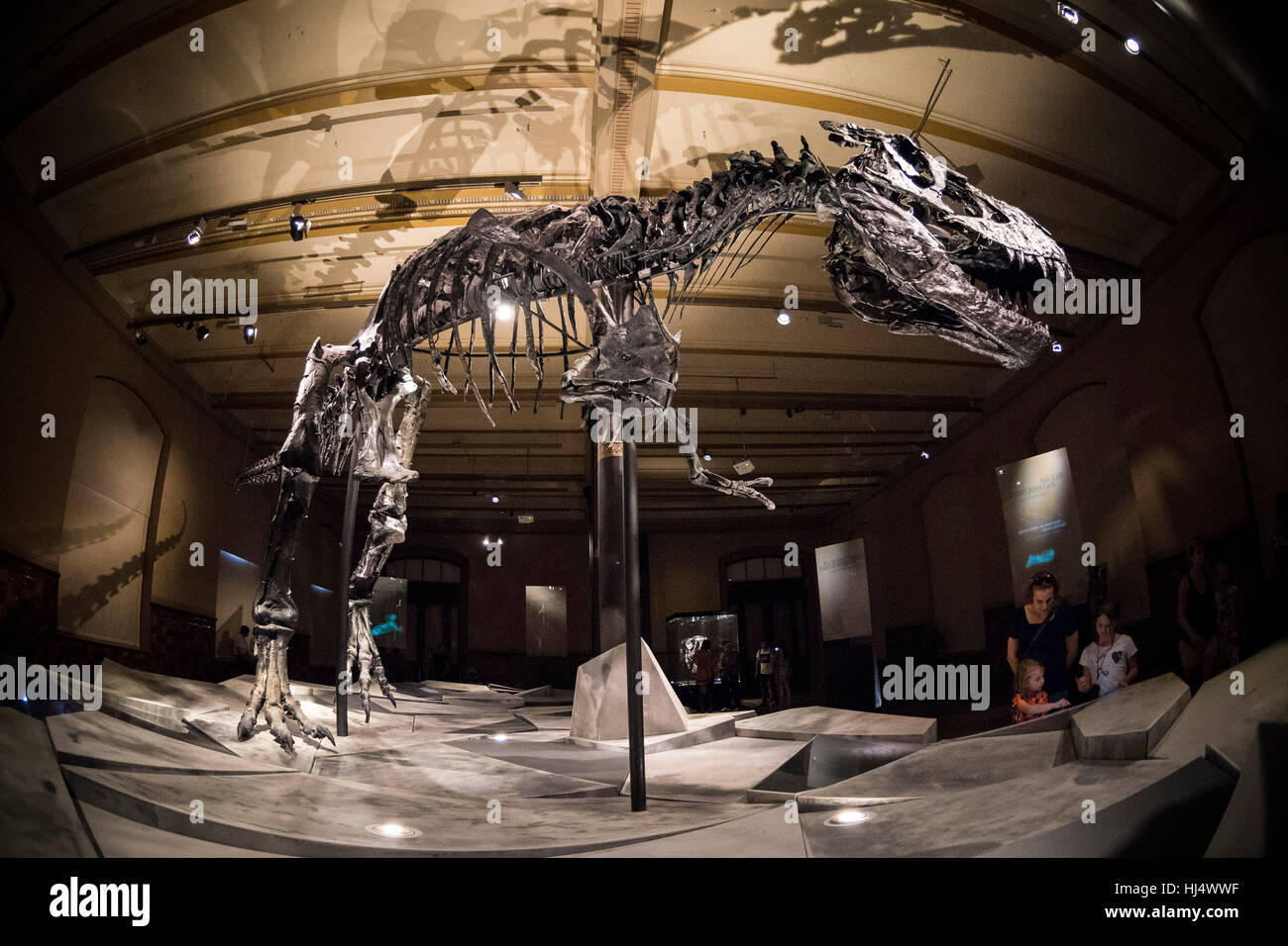 Berlín. Alemania. Museum für Naturkunde, esqueleto de 'Tristán', el Tyrannosaurus rex. Imagen De Stock
