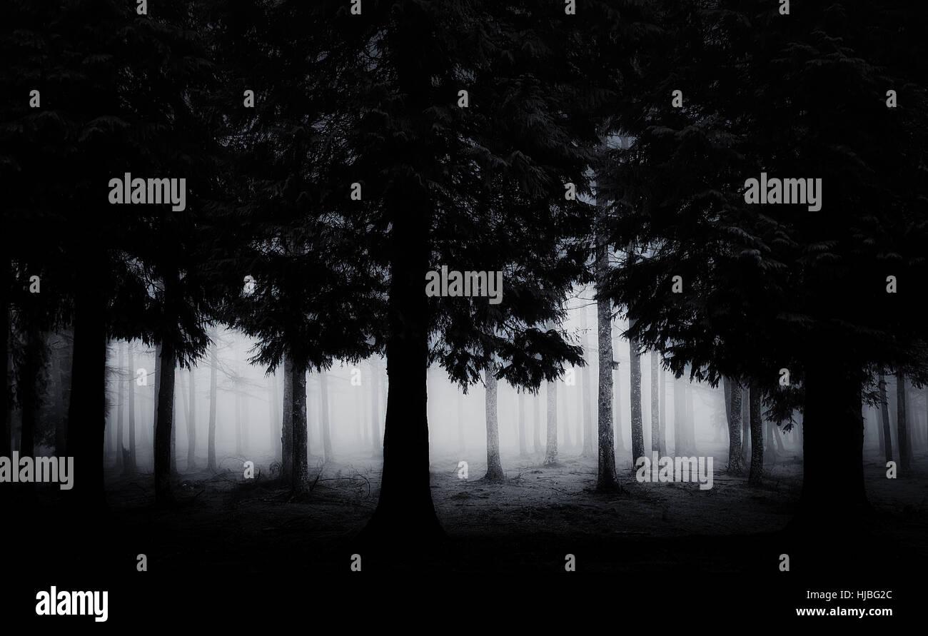 Oscuro y aterrador bosque Imagen De Stock