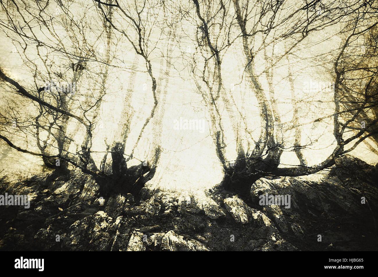 Scary bosque con árboles escalofriante Foto de stock
