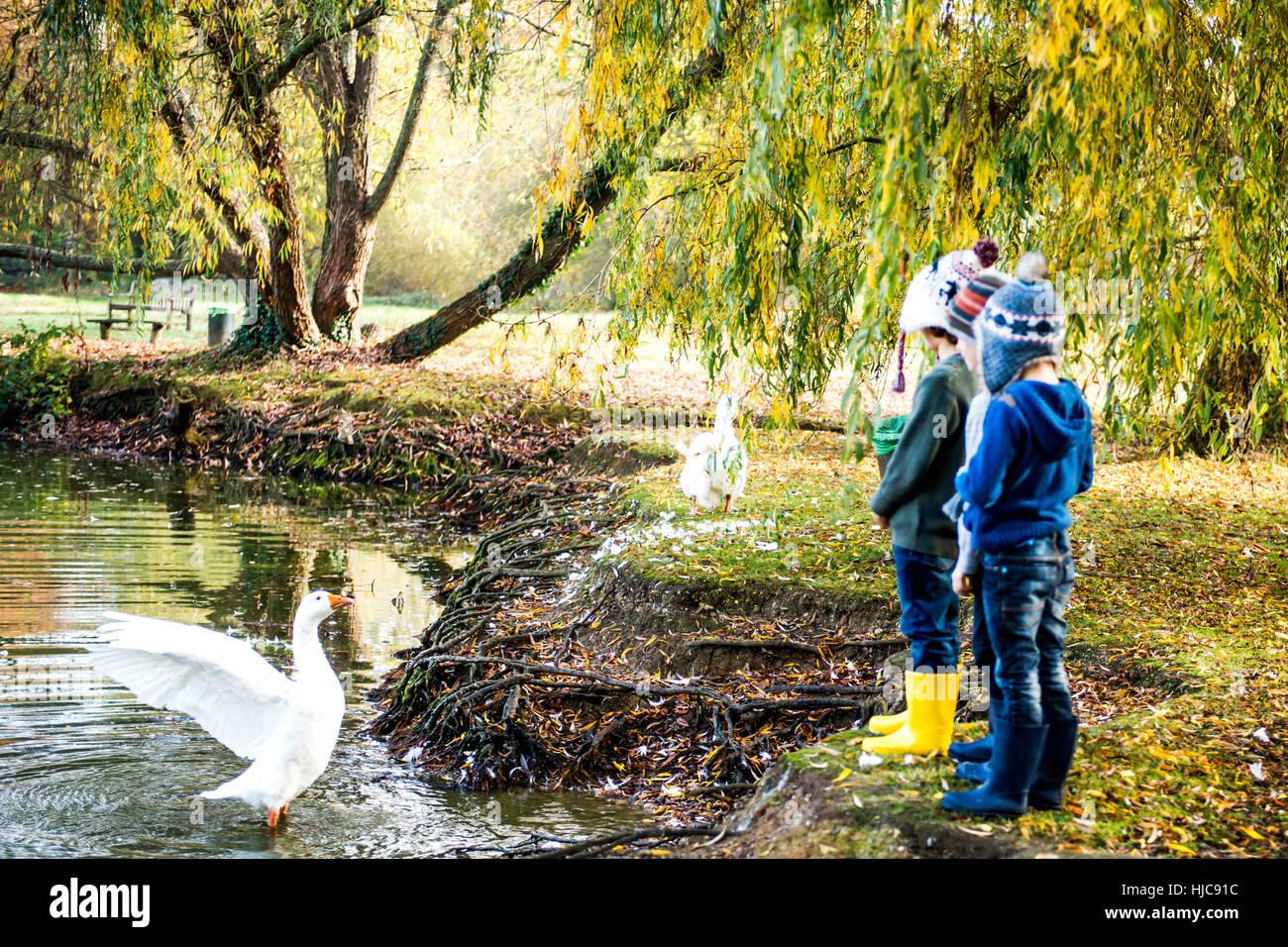 Tres jóvenes, de pie al lado del lago, viendo goose en agua Foto de stock