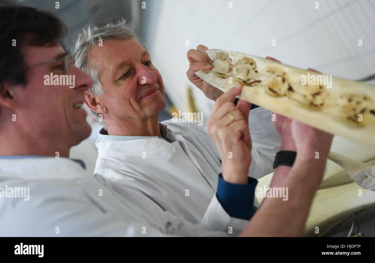Carsten Staszyk (l) y Martin Bergmann, profesores de Anatomía ...