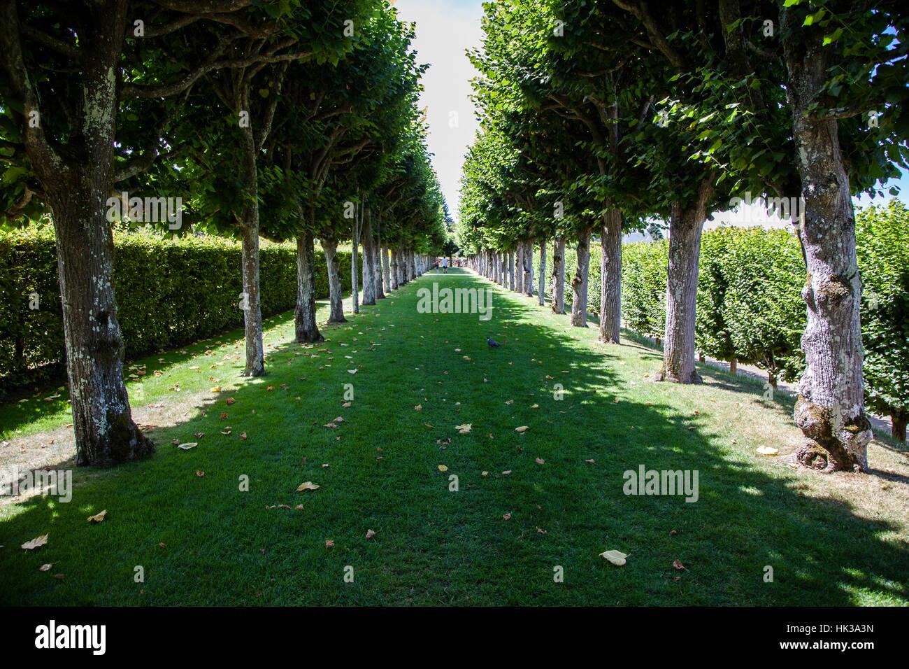 Árboles alley en Villandry castillo en el Valle del Loira, Francia Foto de stock