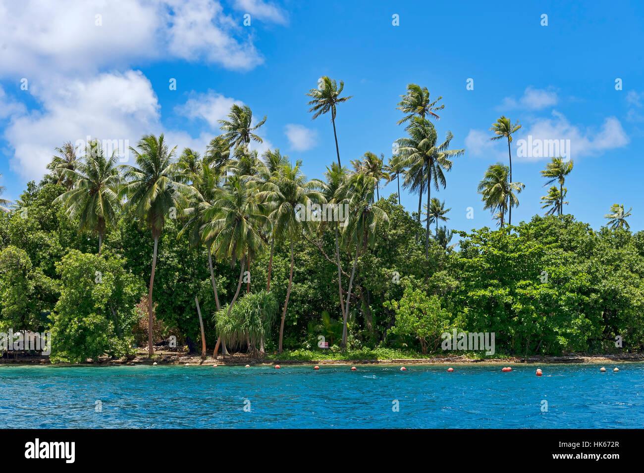 Palm Beach en Raiatea, Polinesia Francesa, Pacífico Sur, Oceanía Foto de stock