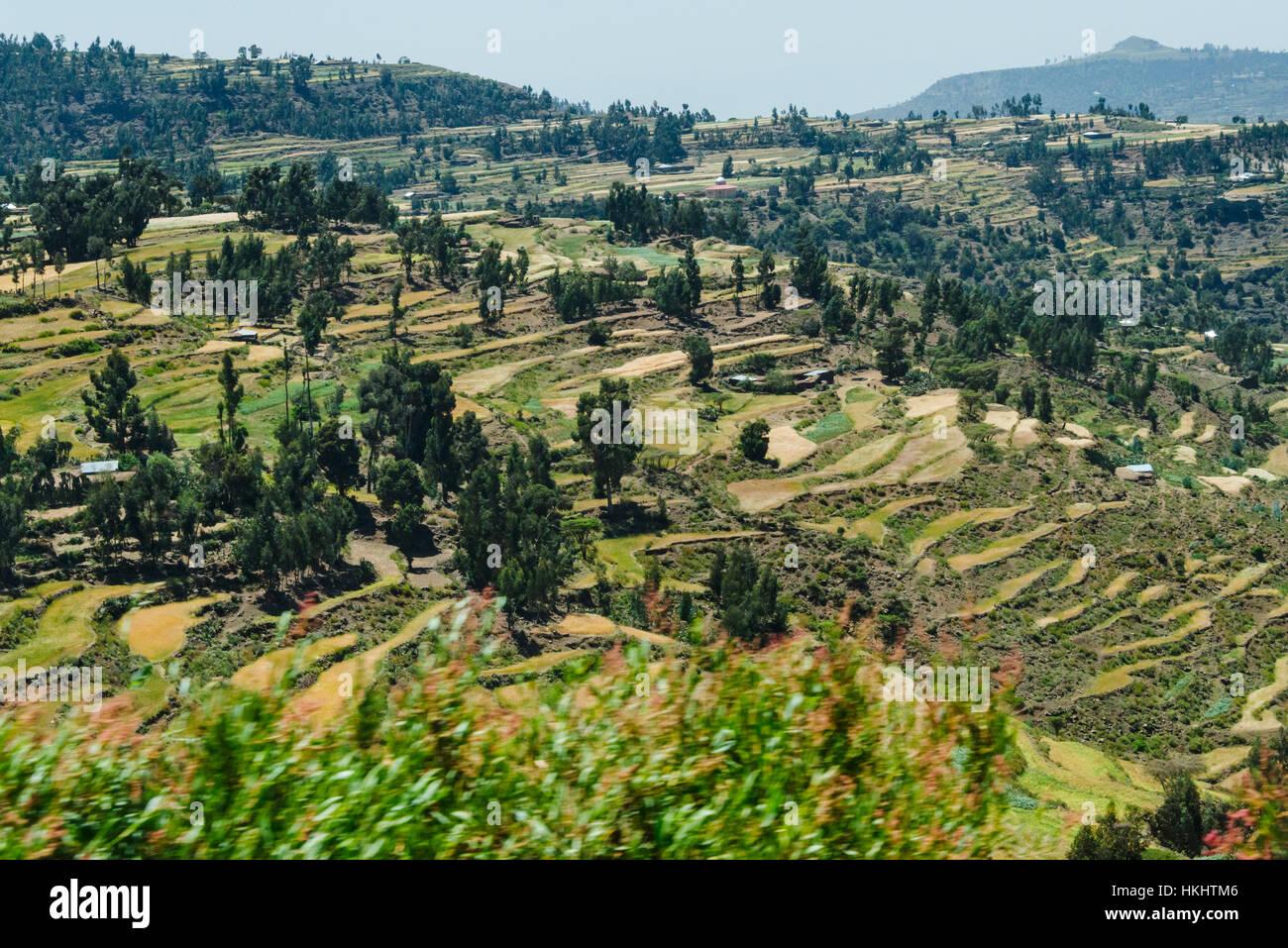 Cultivo En Terrazas En La Montaña En La Región De Tigray