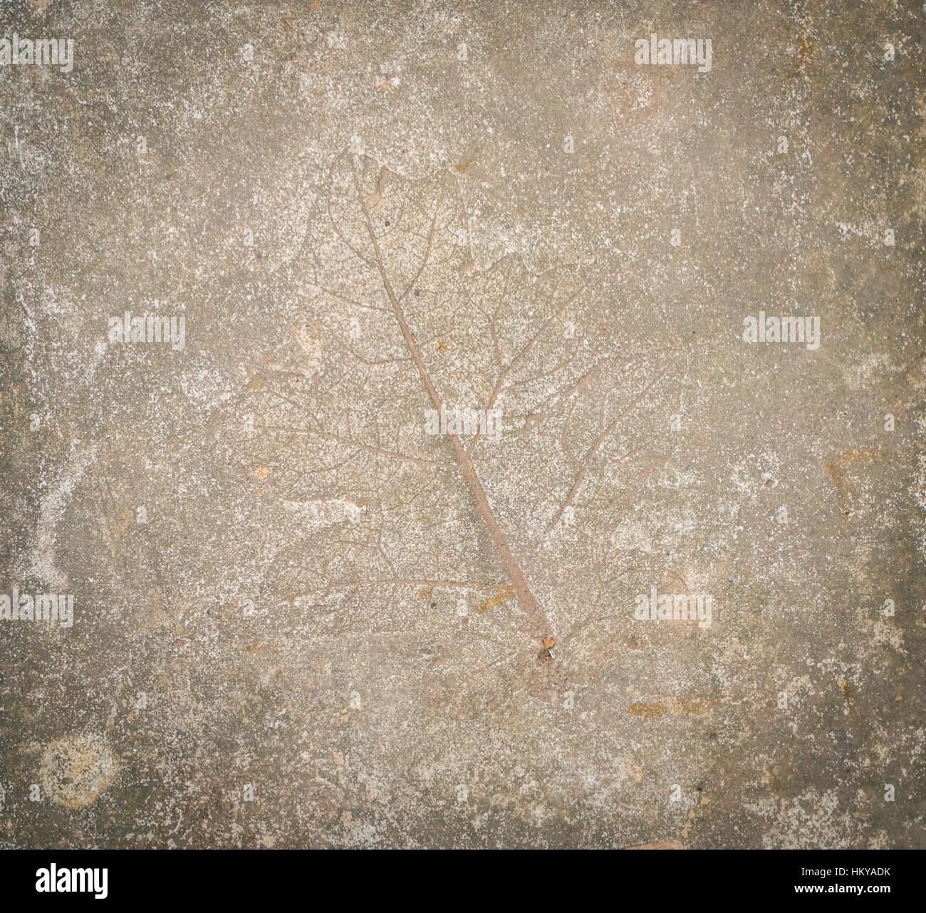 Impresión De Hojas En Piedra Foto Imagen De Stock