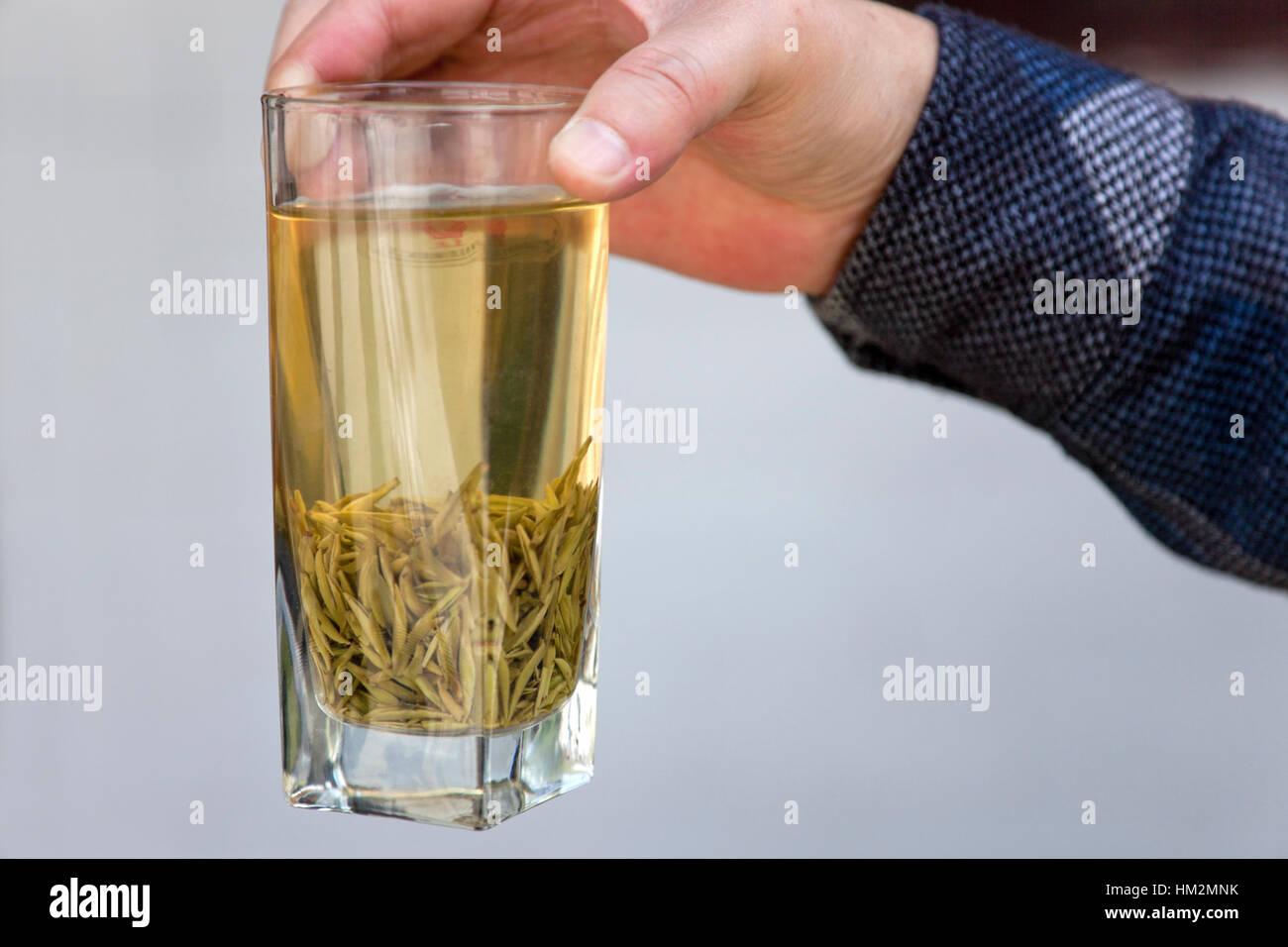 Un vaso de té verde elaborado a partir de brotes tiernos recogido durante la primera cosecha de té del Imagen De Stock