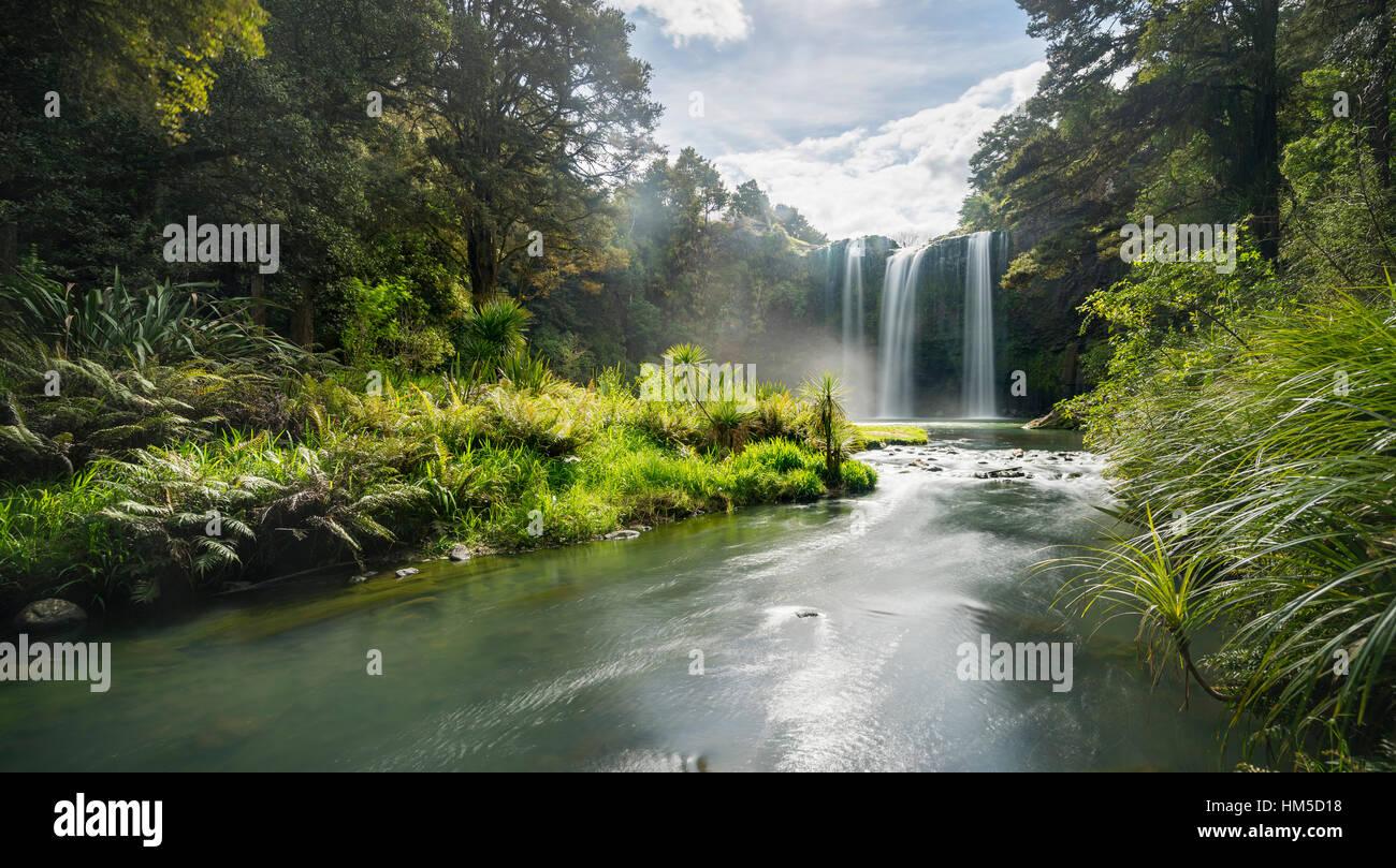 Whangarei, cascadas, bosques lluviosos templados, en Whangarei, Northland, Isla del Norte, Nueva Zelanda Imagen De Stock