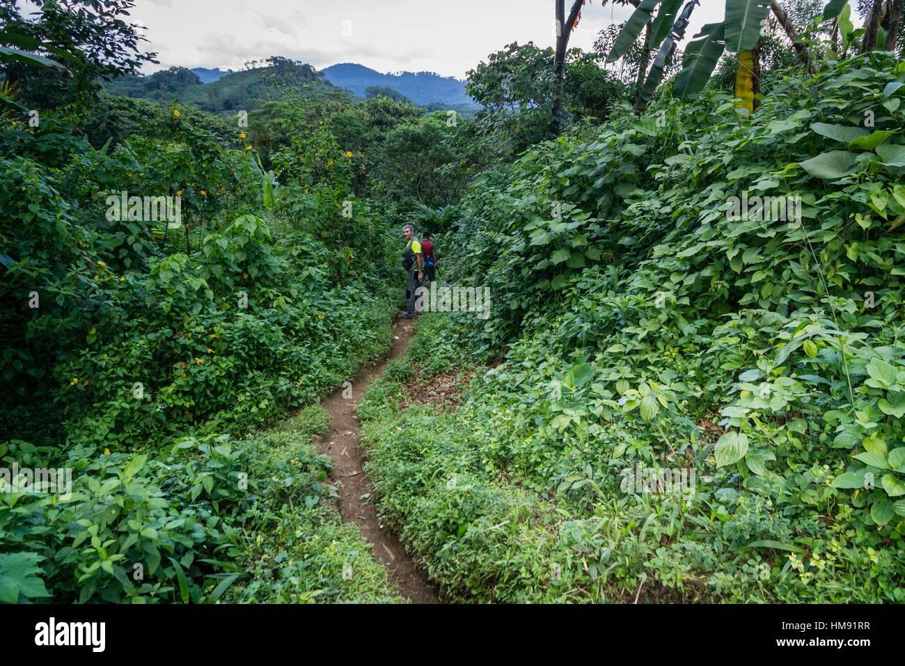 Escursion entre bosque tropical, Los Cerritos, Lancetillo, La parroquia, zona Reyna, Quiché, Guatemala, América Imagen De Stock