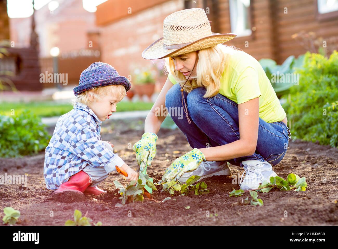 Madre e hijo plantar plantones de fresa en suelos fértiles fuera en el jardín Foto de stock