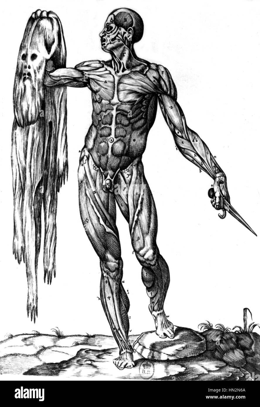 Anatomía por Valverde. Un ecorche sosteniendo su piel Medicina ...