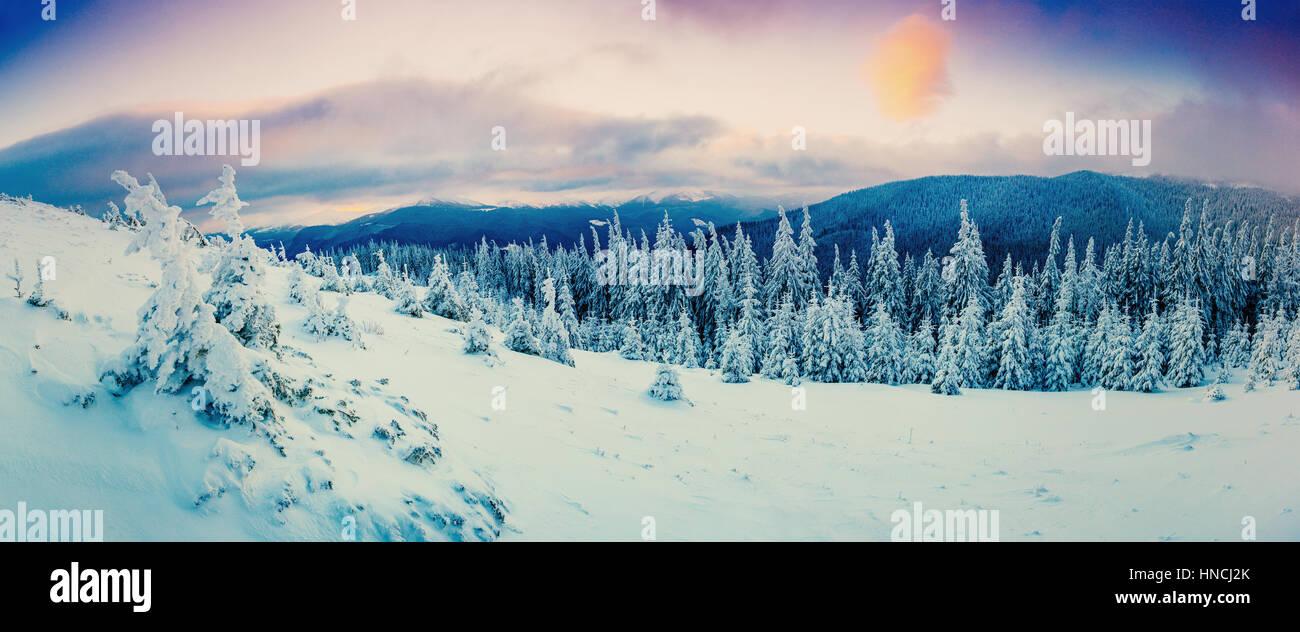 Árbol cubierto de nieve de invierno mágico Foto de stock