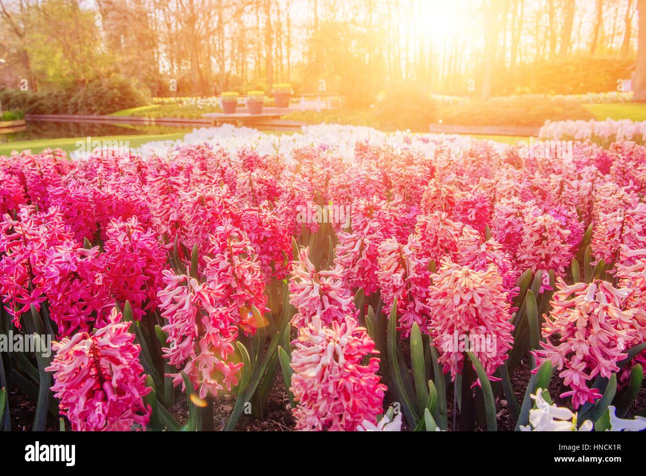 Arriates de flores en el parque. Imagen De Stock