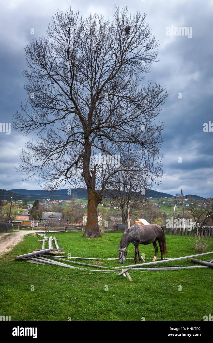 Caballo gris. Hermoso caballo gris en el pastoreo de verano. Los caballos una manzana, complicó el caballo, Imagen De Stock