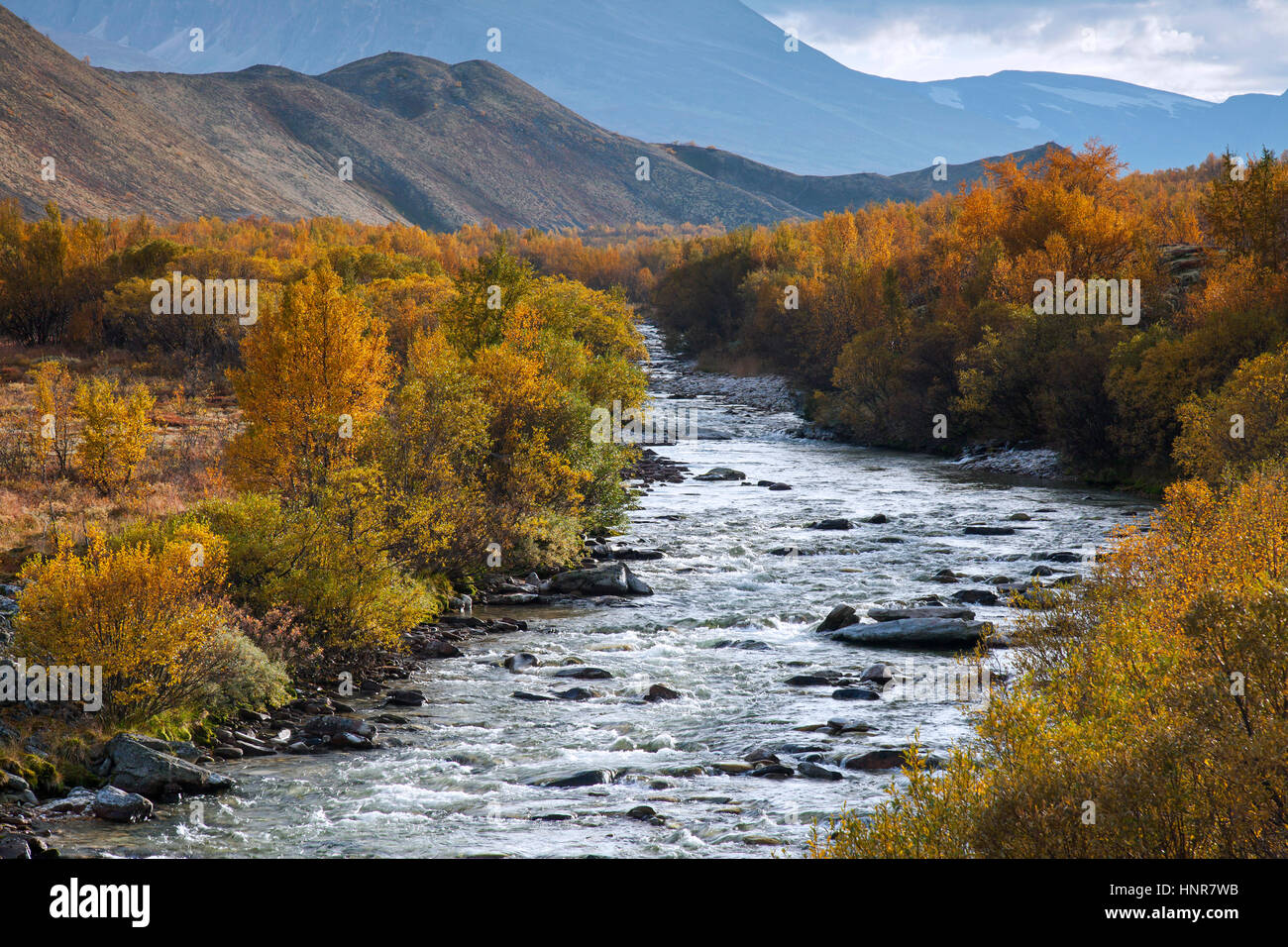 Río Atna en Dørålseter / Doralseter en el Parque Nacional Rondane en otoño, Dovre, Noruega, Imagen De Stock