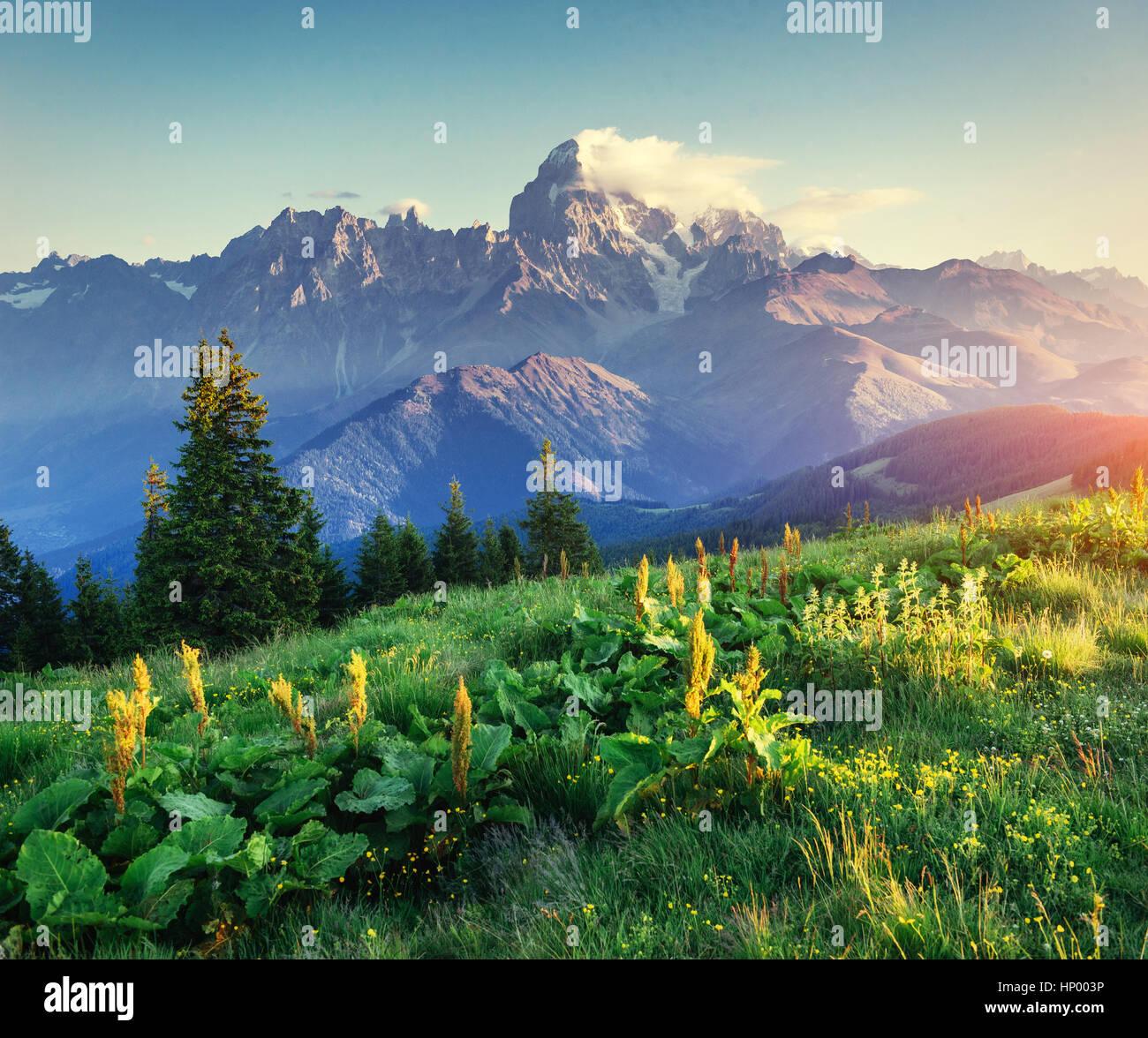 Flores silvestres en las montañas al atardecer. Los Cárpatos. Ucrania, UE Imagen De Stock