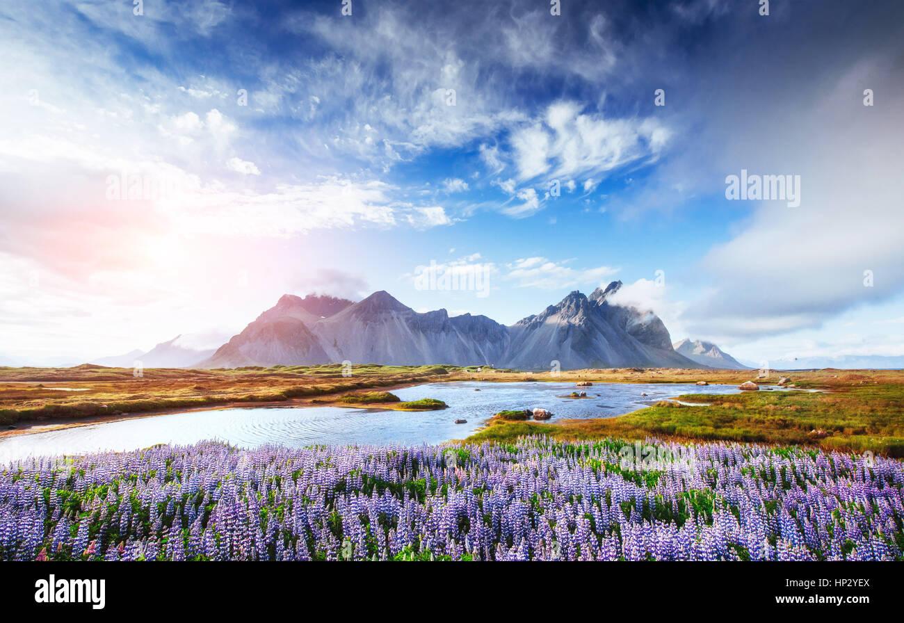 El pintoresco paisaje de bosques y montañas de Islandia Imagen De Stock