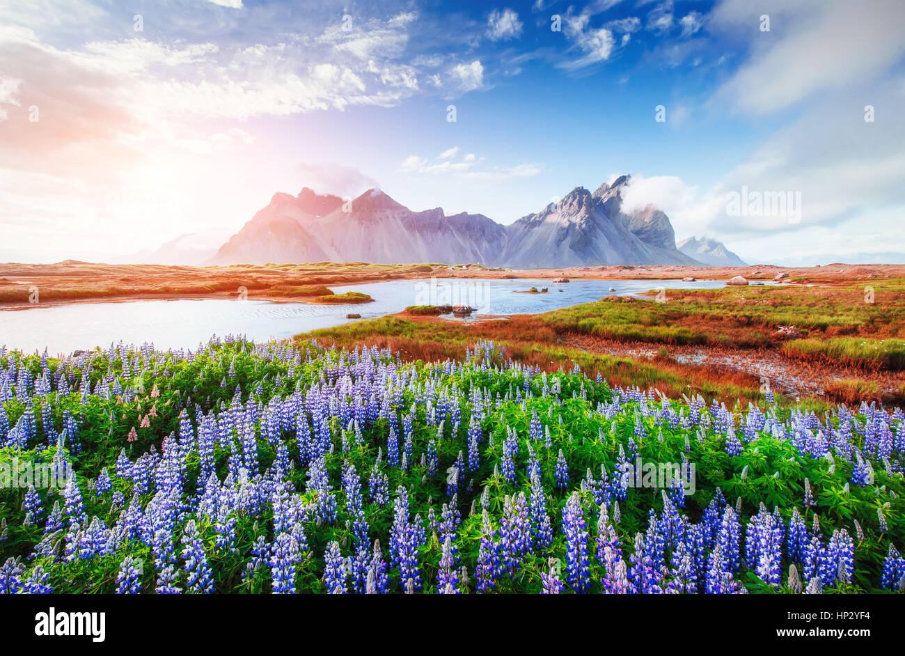 El pintoresco paisaje de bosques y montañas de Islandia. Imagen De Stock