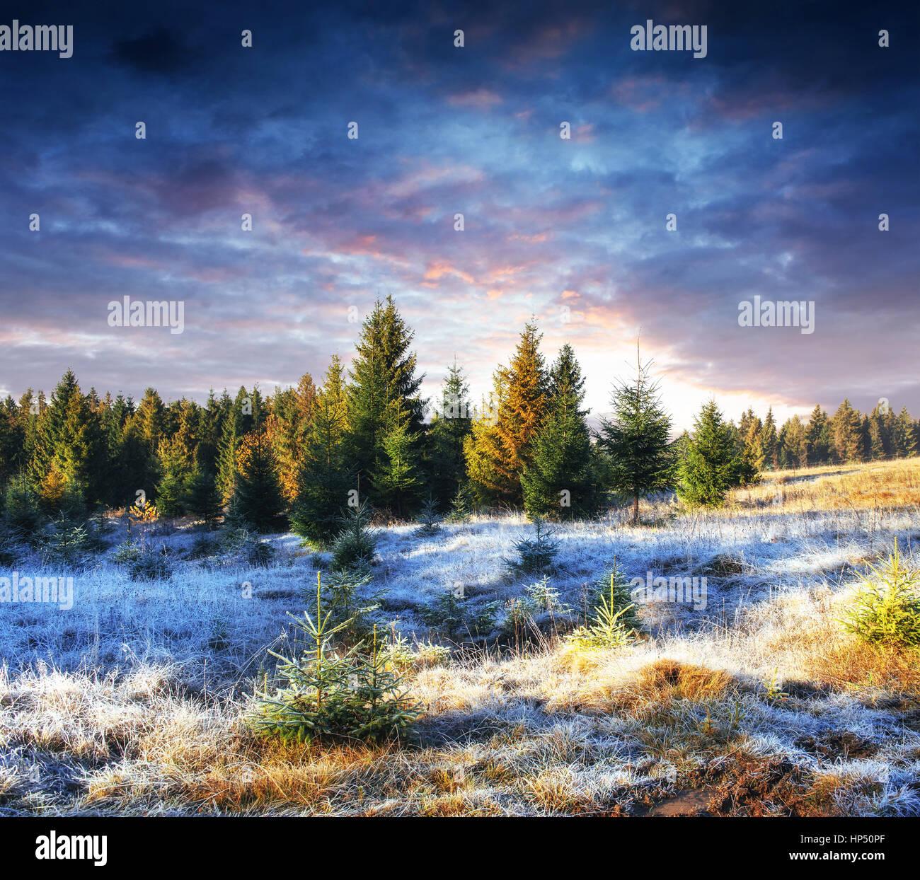 Invierno mágico árbol cubierto de nieve. Puesta de sol en los Cárpatos. Ukr Foto de stock