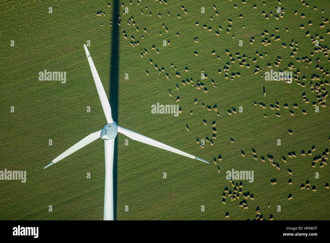 Planta de energía eólica en un campo, un rebaño de ovejas, campos, fuentes alternativas de energía, Imagen De Stock
