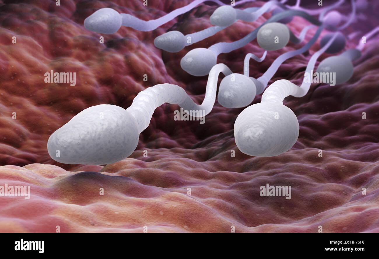 Células de esperma masculino. Ilustración 3D Imagen De Stock