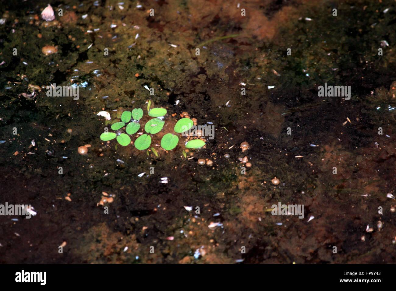Verde Resumen Foto de stock