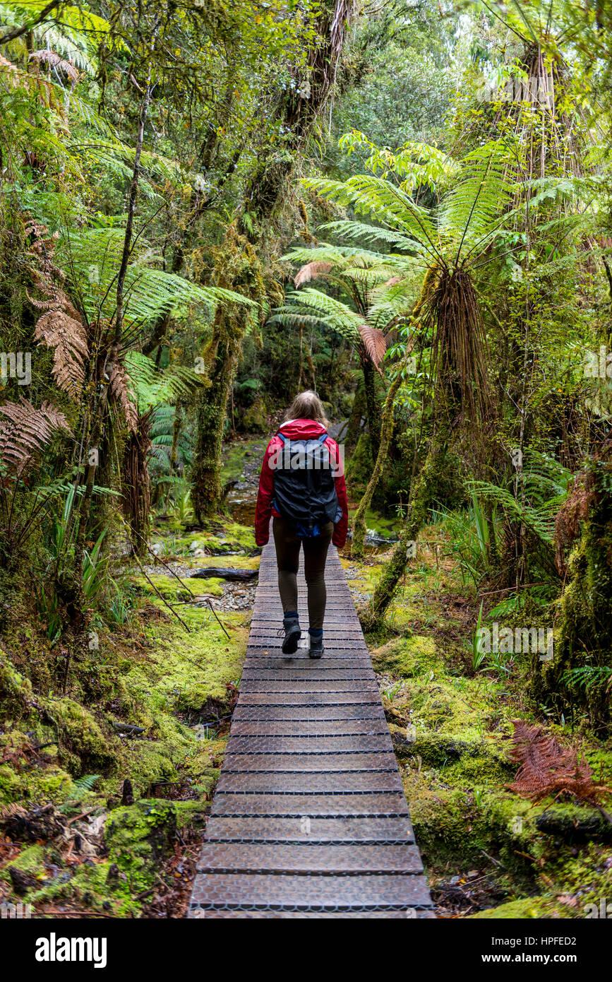 Excursionista de caminar a través de la selva en el lago Matheson, Glaciar Fox, West Coast, Southland, Nueva Imagen De Stock