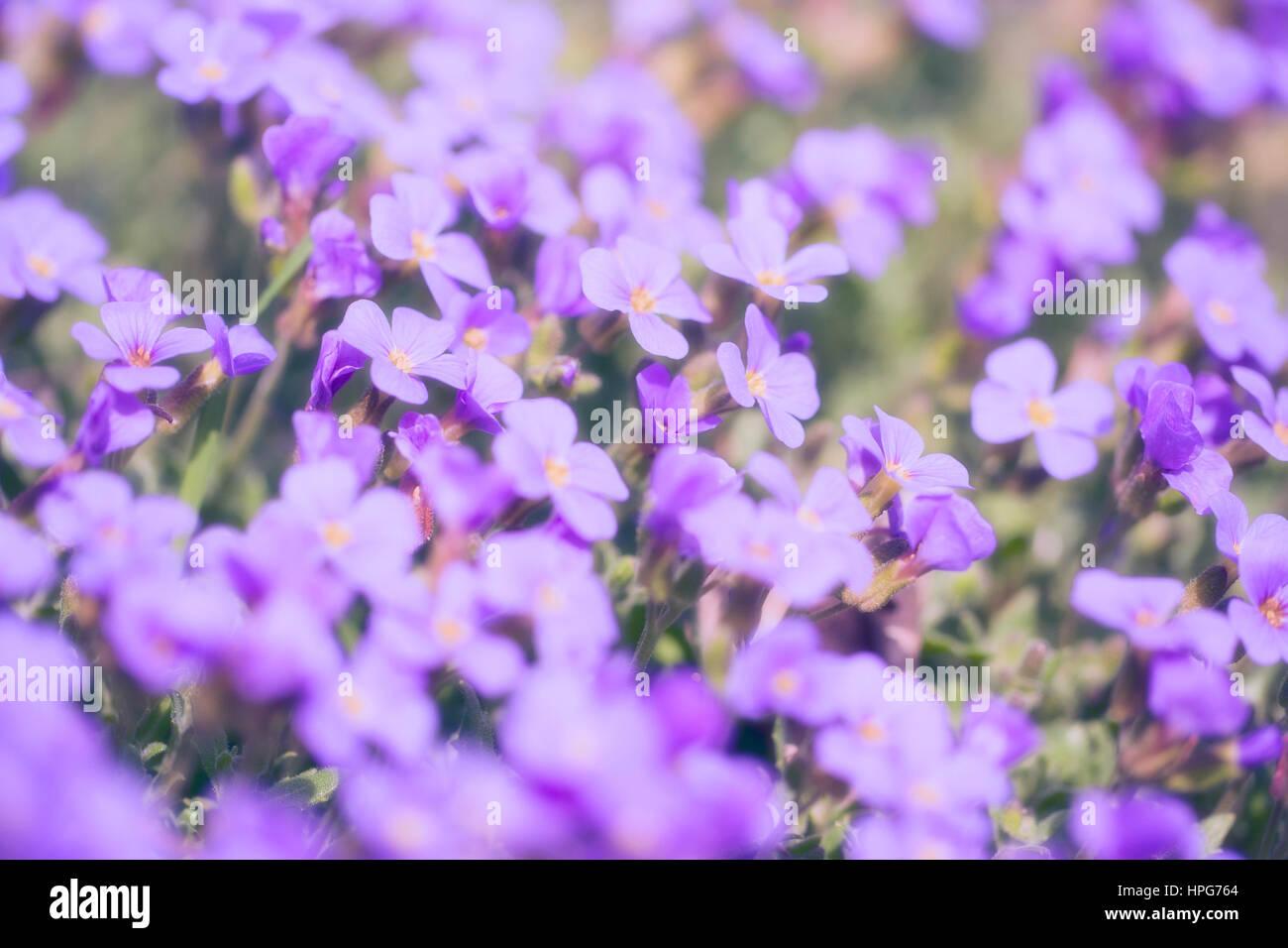 Flores en Sunset Imagen De Stock