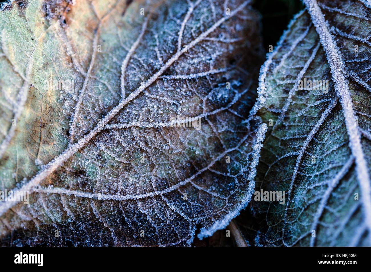 Helado hojas Imagen De Stock