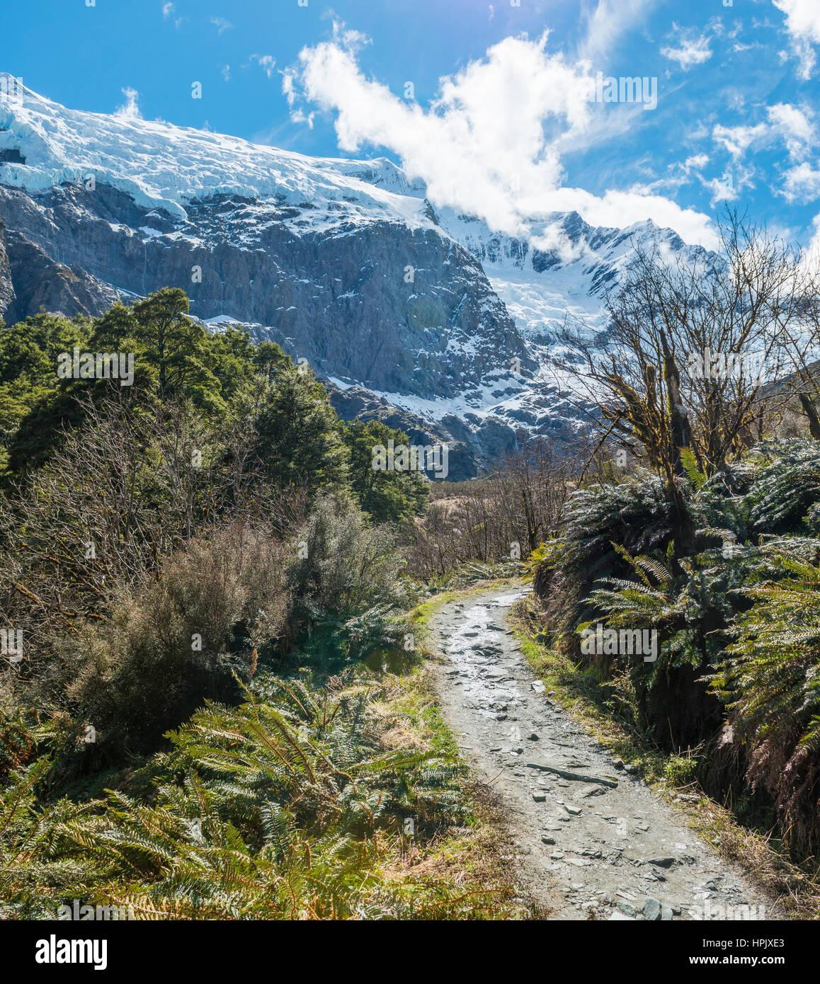 Hiking Trail, Rob Roy Glaciar, Parque Nacional Monte aspirantes, Otago, Southland, Nueva Zelanda Imagen De Stock