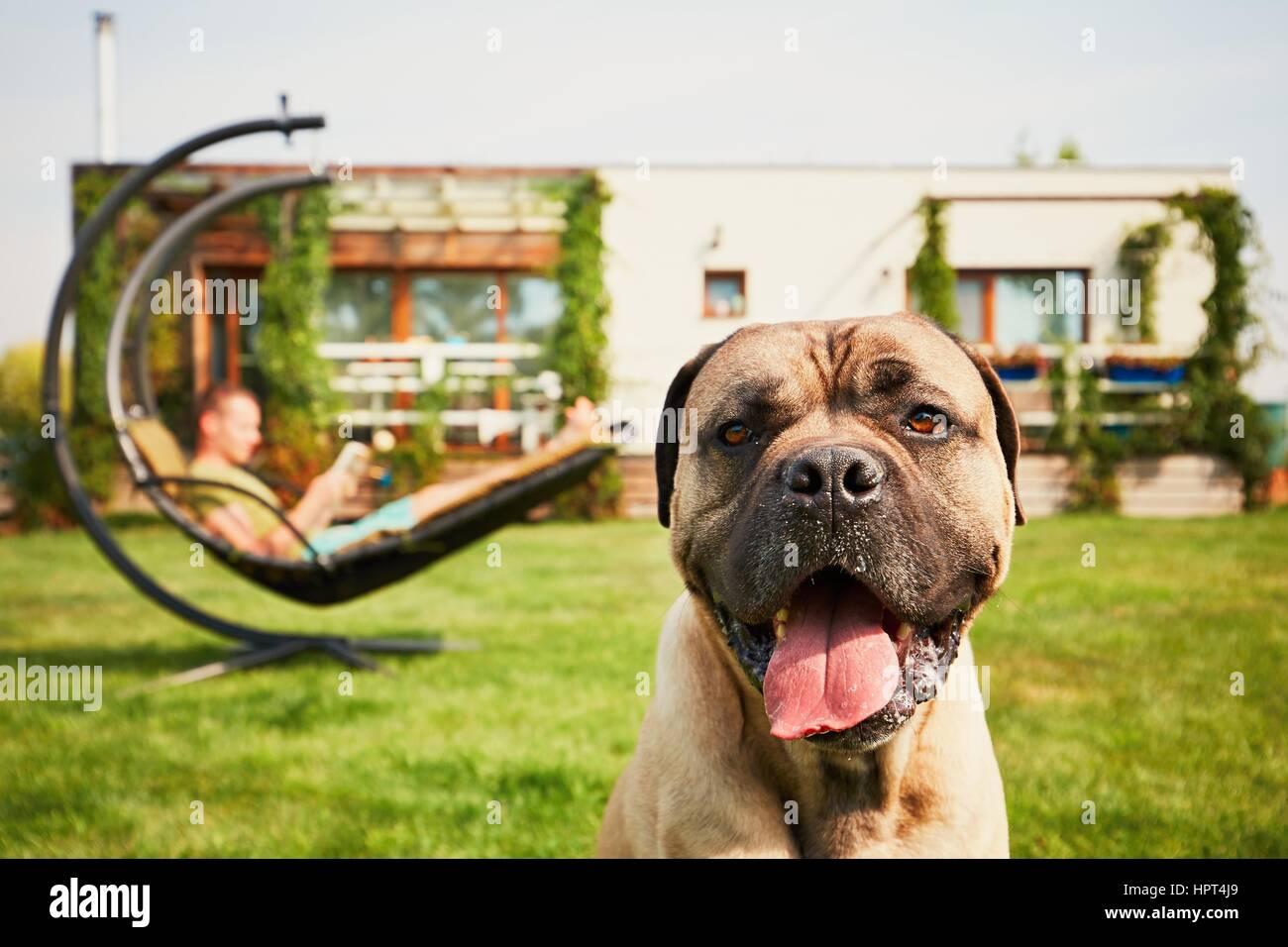 Joven libro de lectura (aprendizaje) en el swing y gran perro descansando en el jardín de la casa de la familia Imagen De Stock