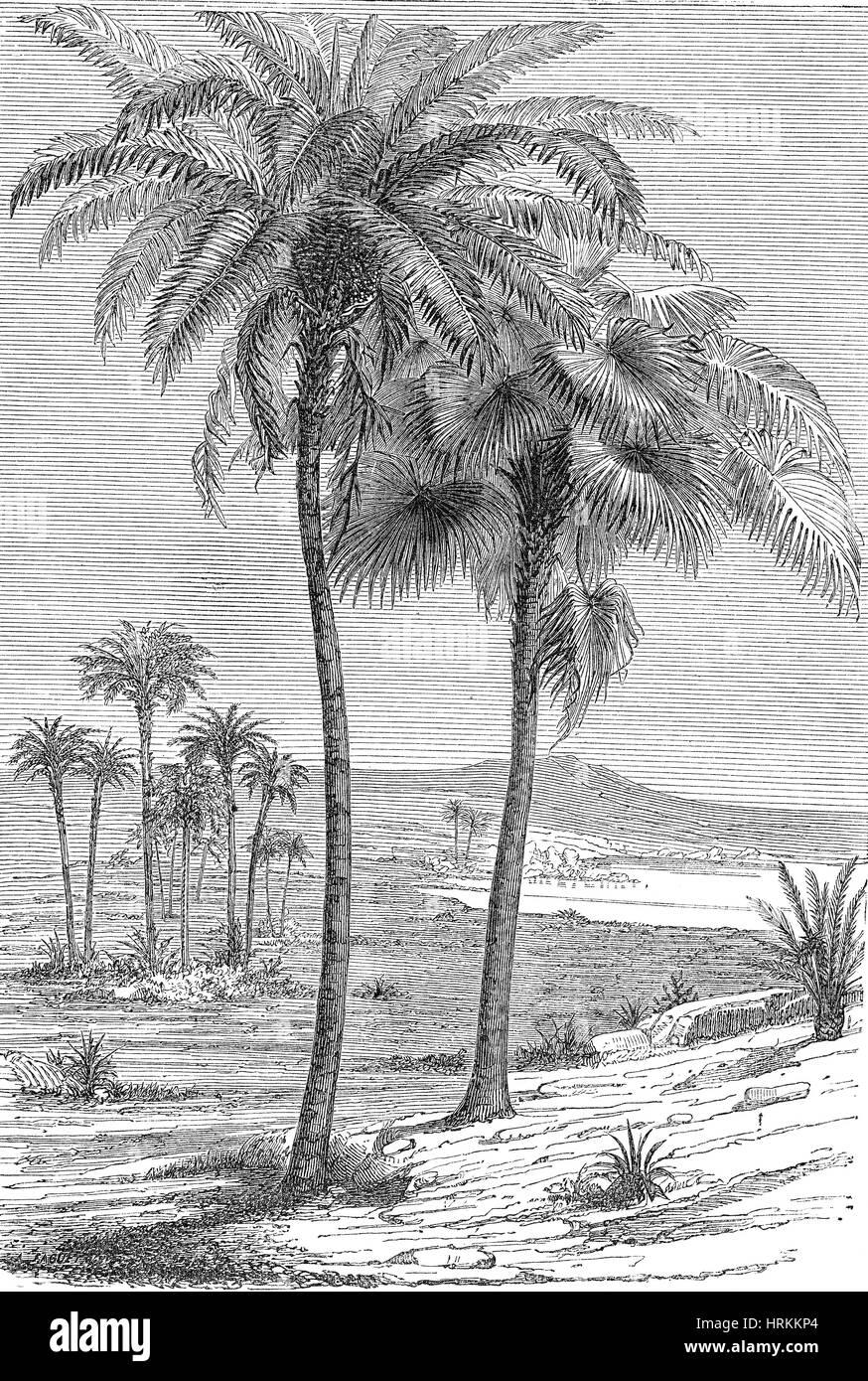 Paisaje prehistórico, Cretáceo Imagen De Stock
