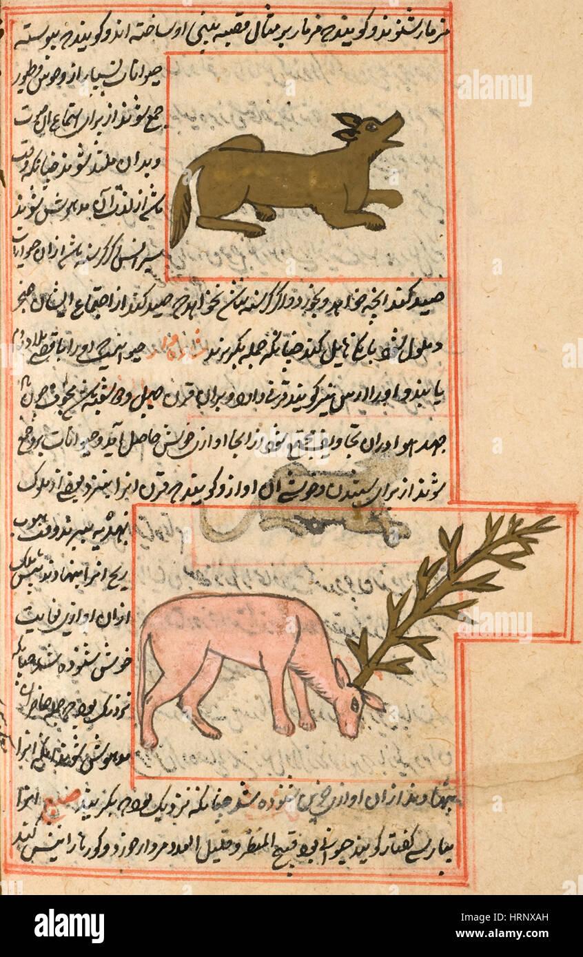 Y Sironsor Shadehvar, criaturas legendarias Imagen De Stock