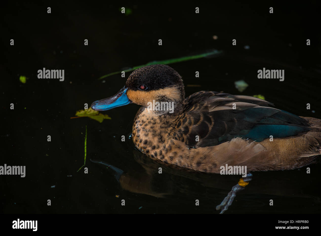 Facturó azul tela flotando sobre el agua Imagen De Stock