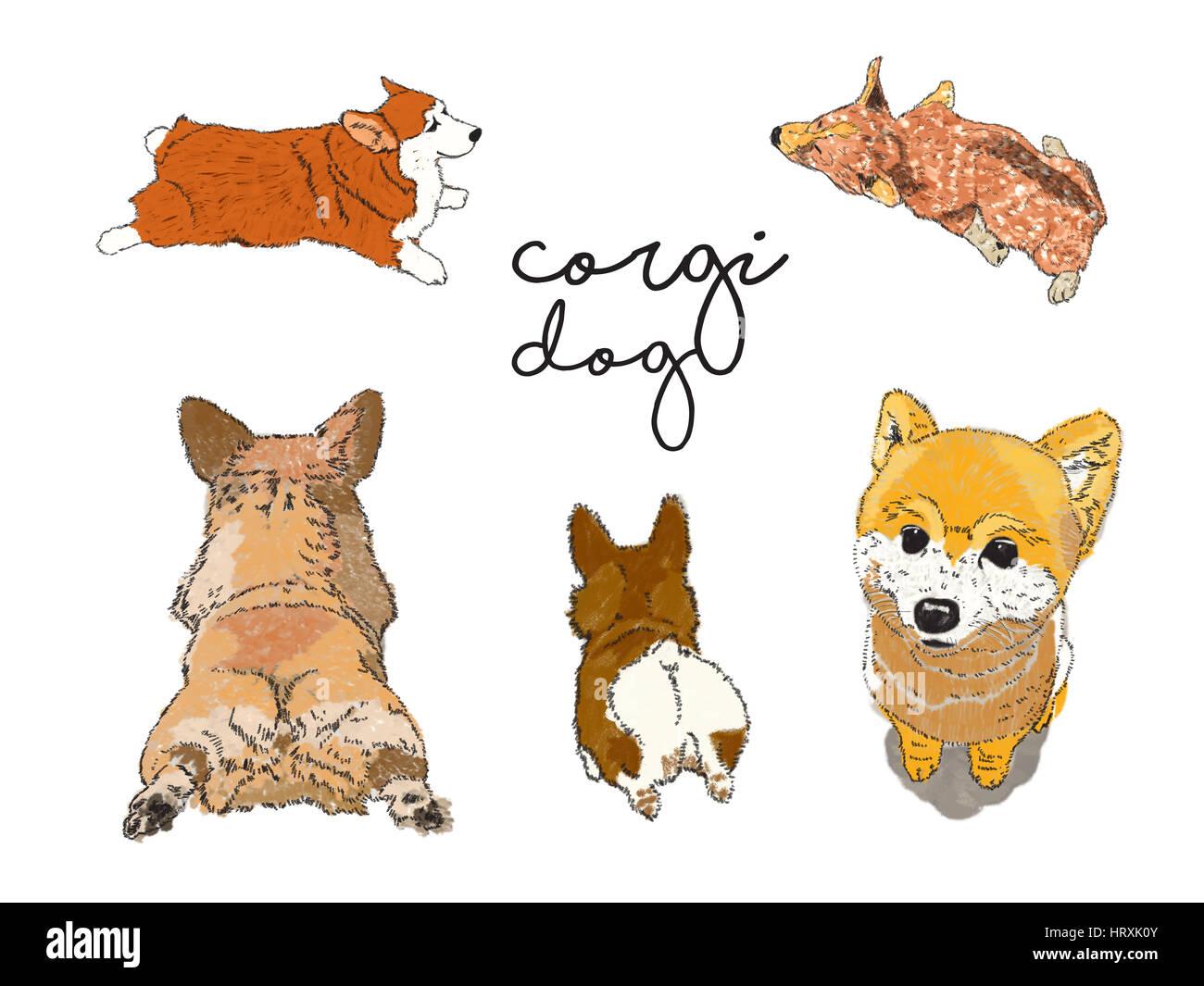 Y Corgi perro Shiba ilustración embalados sin referencia. Imagen De Stock
