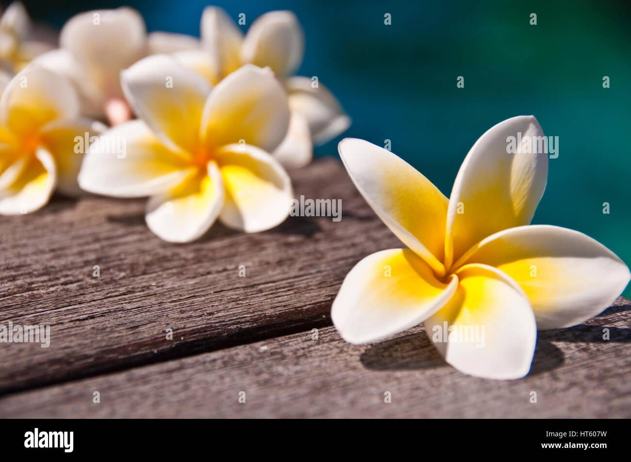 Plumeria flores sobre el piso de madera, Fondo de agua azul Imagen De Stock