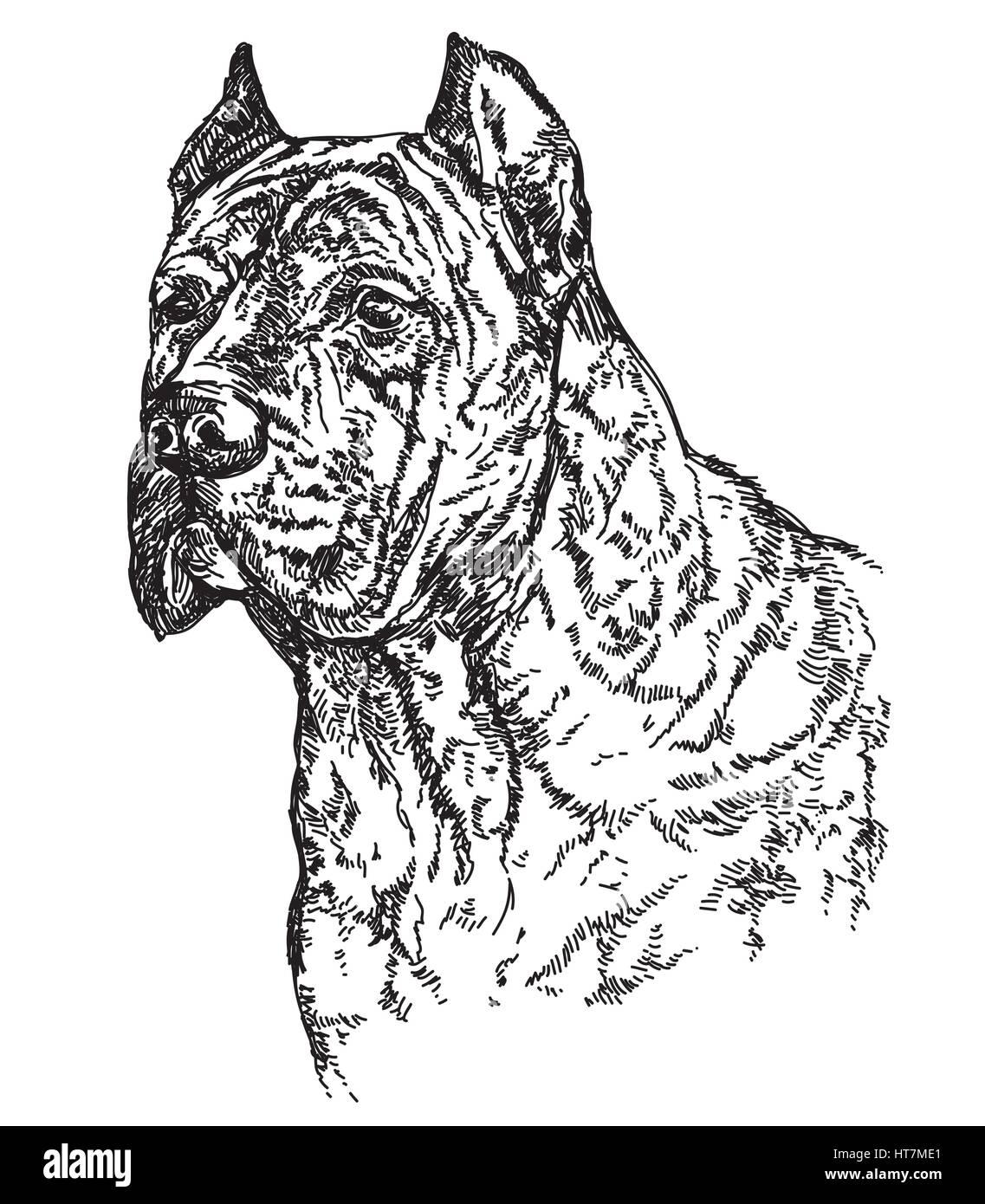 Caña de perro jefe Corsa en profil vector ilustración de dibujo a mano alzada Imagen De Stock