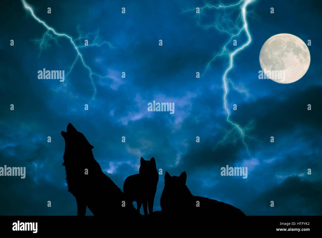 Paquete De Lobos Aullando A La Luna Foto Imagen De Stock