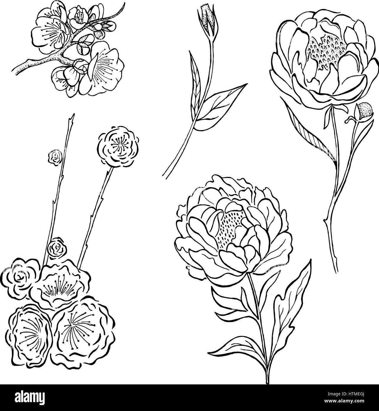 Colección de vectores dibujados a mano rosa peonía y flores y ...