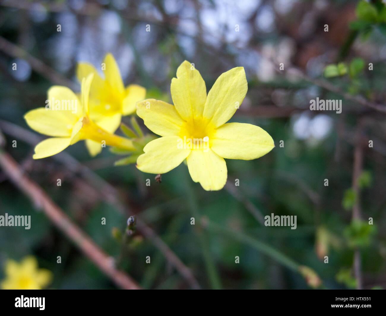 Unas bonitas flores de color amarillo Foto & Imagen De Stock ...