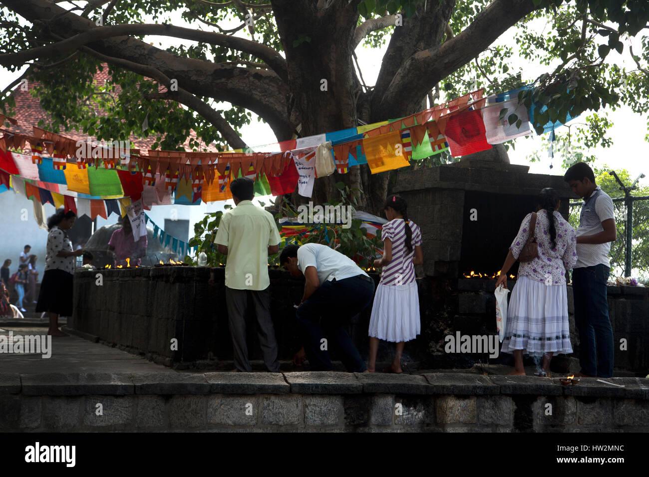Dambulla Sri Lanka personas iluminación lámparas de mantequilla árbol Bo Foto de stock