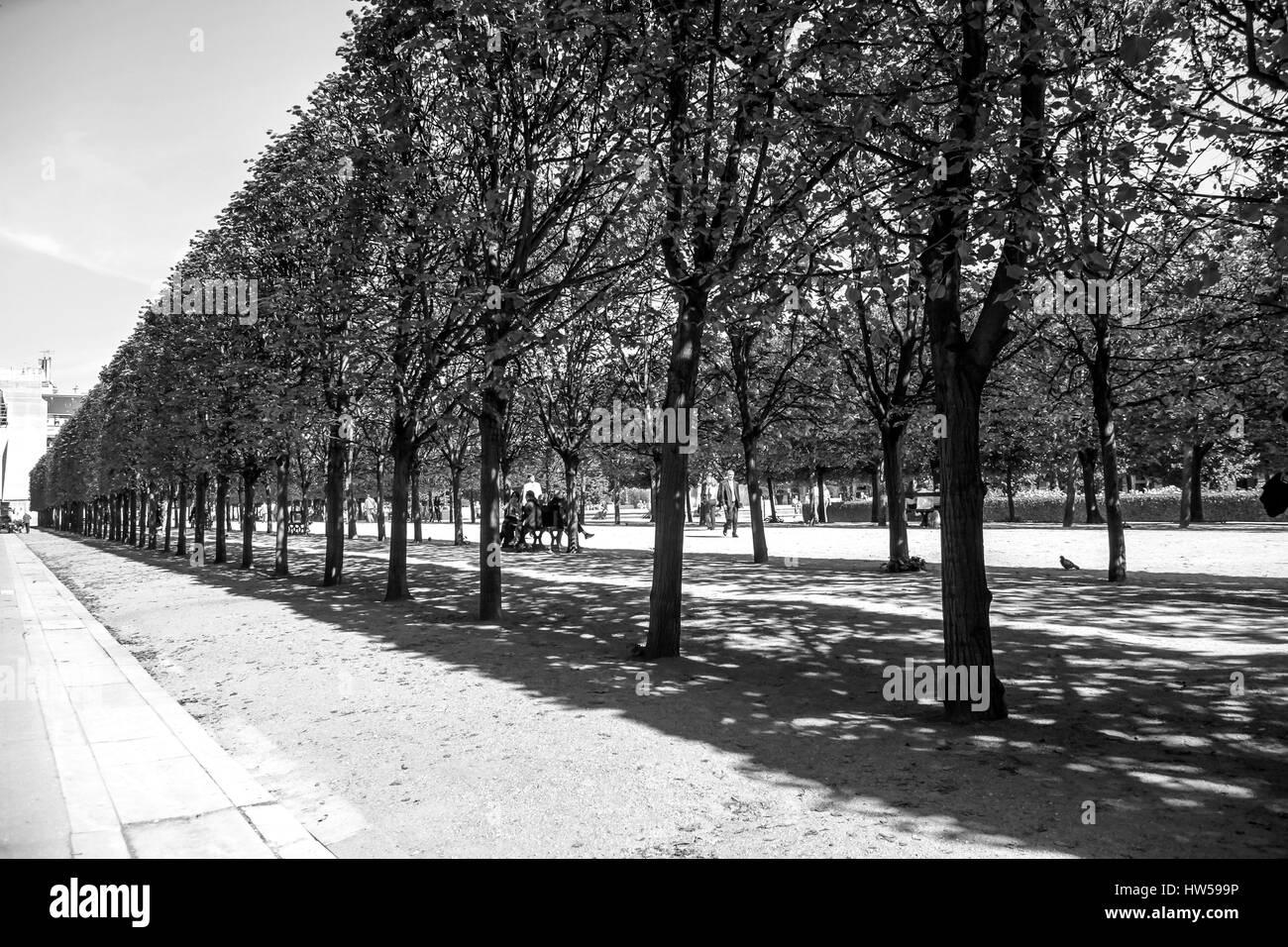 Jardín Tuilleries vista arbolada conduce al museo del Louvre. Summer View de la Terrasse du bord de l'Eau en París, Francia, en blanco y negro Foto de stock