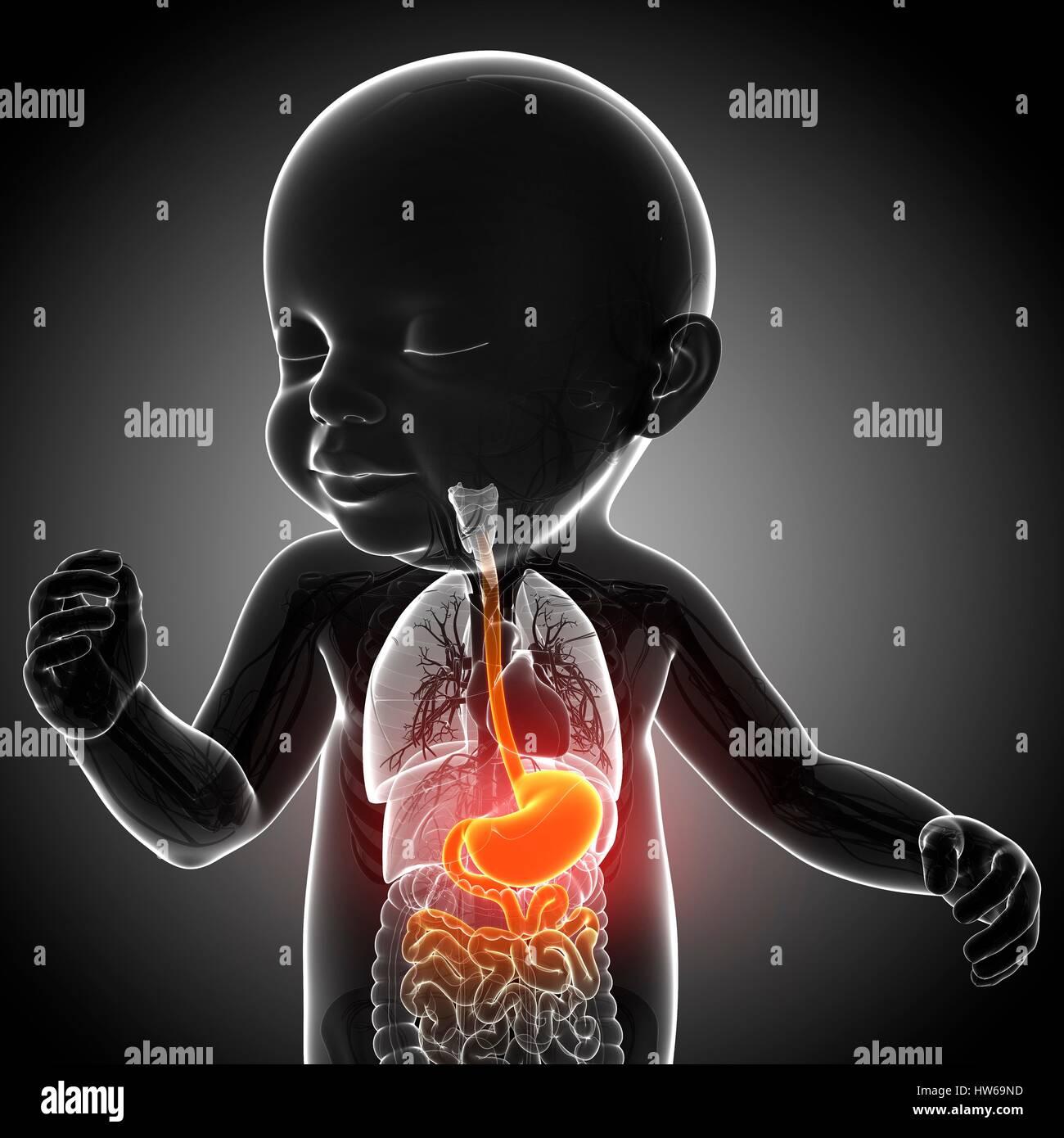 Ilustración de una anatomía del estómago del bebé Foto & Imagen De ...