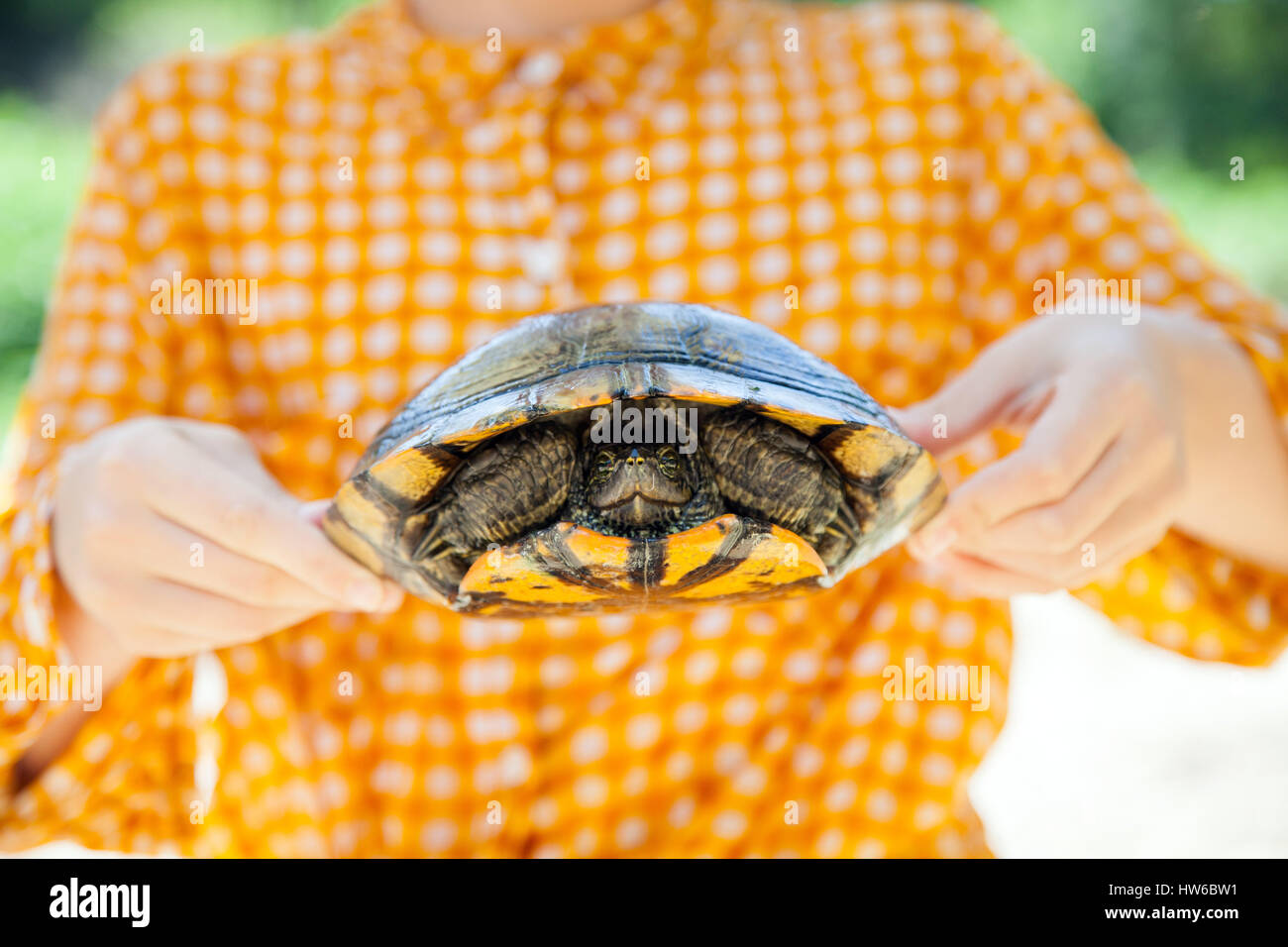 La celebración de una tortuga Imagen De Stock