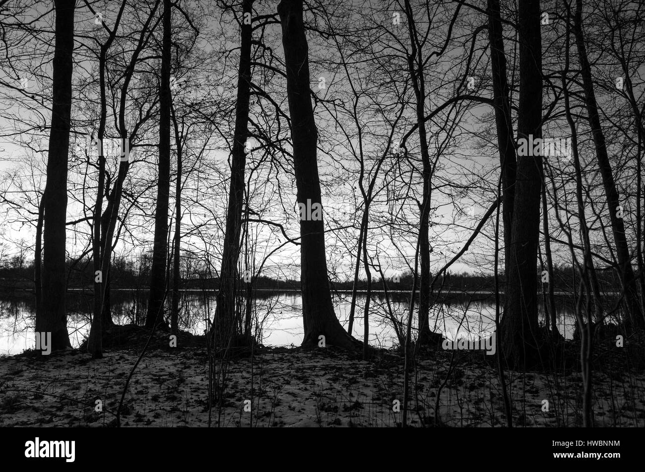 Noche De Invierno En El Lago En Suecia Escandinavia Europa Hermoso
